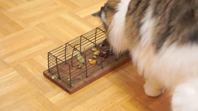 ネズミ捕りをマウスと猫 - 囚人点の映像素材/bロール