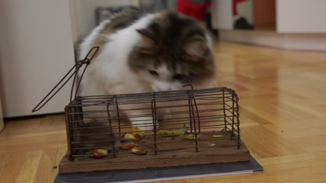 mousetrap with a mouse and a cat - siberian mouse stock videos & royalty-free footage