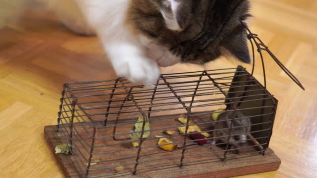 mousetrap with a mouse and a cat - security screen stock videos & royalty-free footage