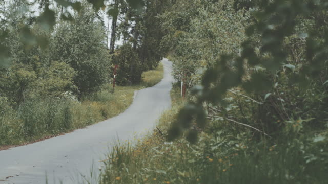moutain road surrounded by spruce and birch trees - wilderness stock videos & royalty-free footage