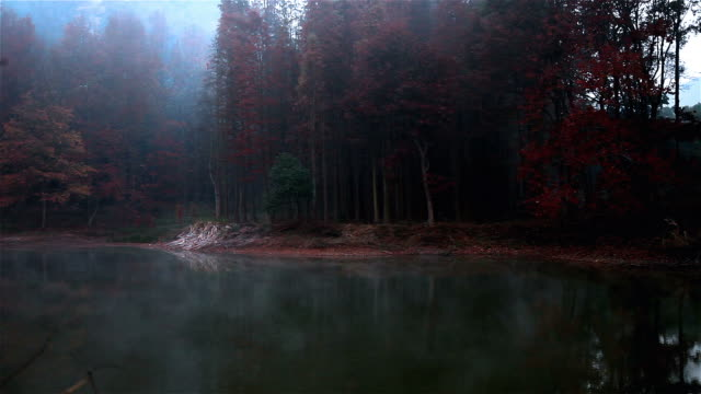 stockvideo's en b-roll-footage met move fog of autumn forest - sequoiafamilie