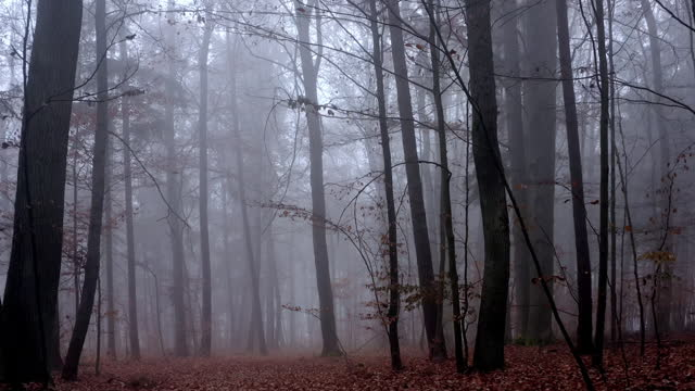 move through misty autumn forest - tree area stock videos & royalty-free footage