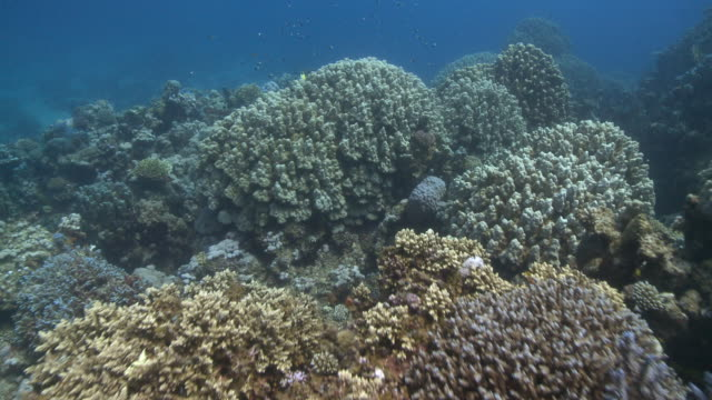 Move to and over corals