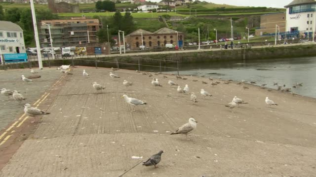 move to tackle aggressive seagull behaviour cumbria whitehaven seagulls on slipway seagull flying along seagulls in car park - aggression stock videos & royalty-free footage