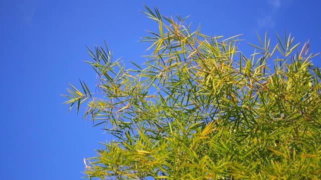 Movement of bamboo tree
