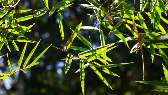 vídeos de stock e filmes b-roll de movimento de bambu árvore - bambu material