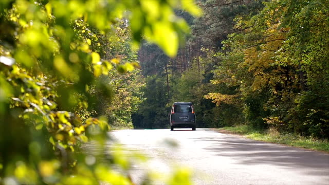 vídeos de stock e filmes b-roll de movement of cars on the forest road. - carrinha veículo