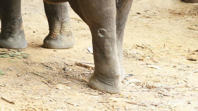 vídeos y material grabado en eventos de stock de movimiento de elefante las piernas - pata de animal pierna