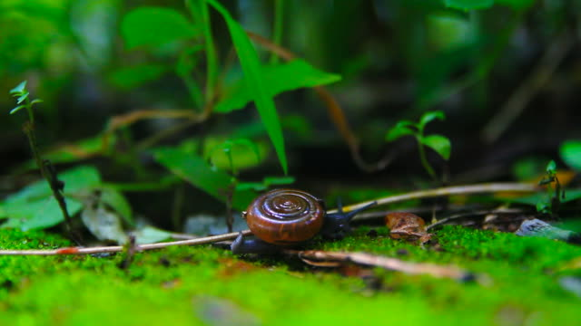 movement of snail - plant stem stock videos & royalty-free footage