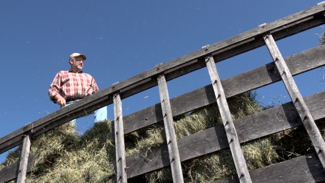 moving around hay bales in the back of a wagon - bale stock videos & royalty-free footage