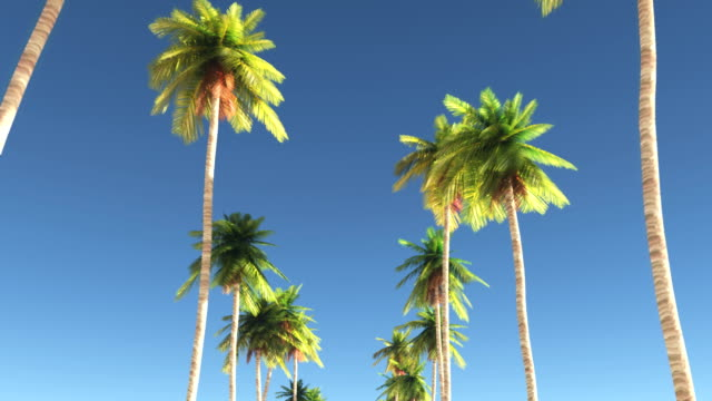 moving between palm trees - palm tree stock videos & royalty-free footage