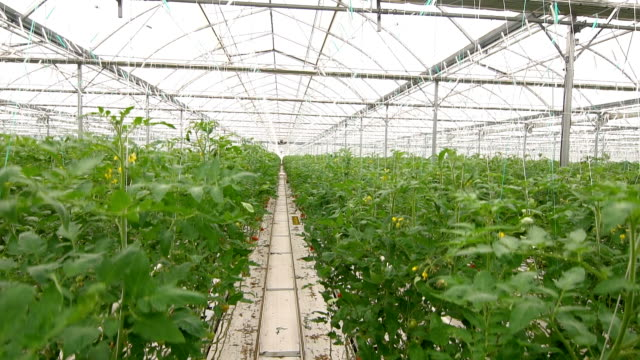 moving camera in greenhouse - greenhouse stock videos & royalty-free footage