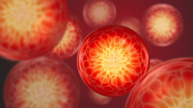 vídeos de stock e filmes b-roll de moving cells - célula humana