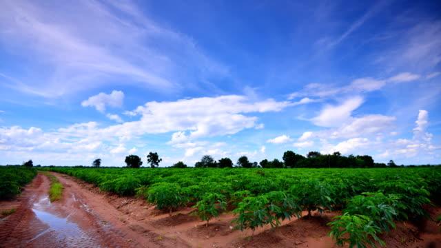 Moving cloud at Cassava farm Time Lapse 4K
