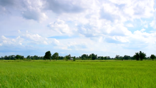 moving cloud over farm - rice paddy stock videos & royalty-free footage