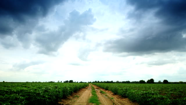 Moving Clouds at Farm Cassava