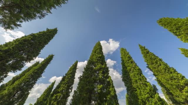 vídeos y material grabado en eventos de stock de mueve las nubes en el cielo azul, lapso de tiempo - cima del árbol