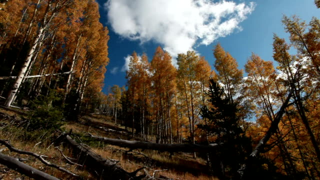WS Moving clouds over autumn aspens / Questa, New Mexico, USA