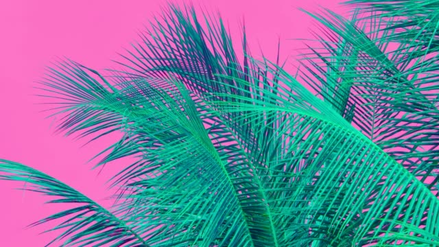 vídeos de stock e filmes b-roll de moving coconut palm tree leaf by wind, colorful - palmeira