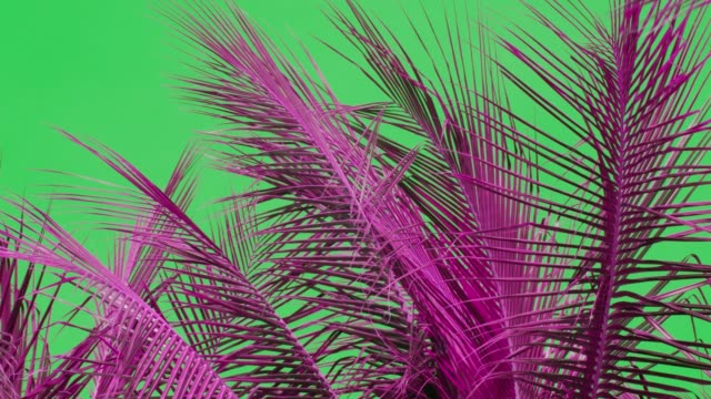 moving coconut palm tree leaf by wind, colorful - film composite stock videos & royalty-free footage