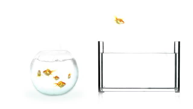 Moving Fish