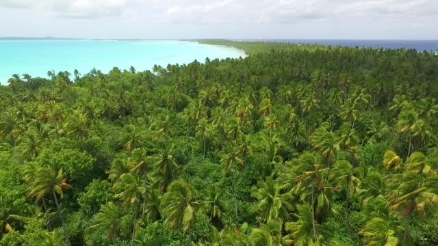 moving forward over coconut palm forest blowing in strong wind - aitutaki lagoon stock videos & royalty-free footage