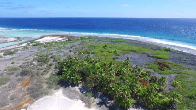 vídeos de stock, filmes e b-roll de moving forward over coconut palms towards ocean from tahanea atoll - territórios ultramarinos franceses