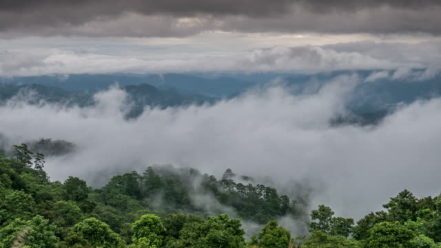 Moving of mist on the rain forest