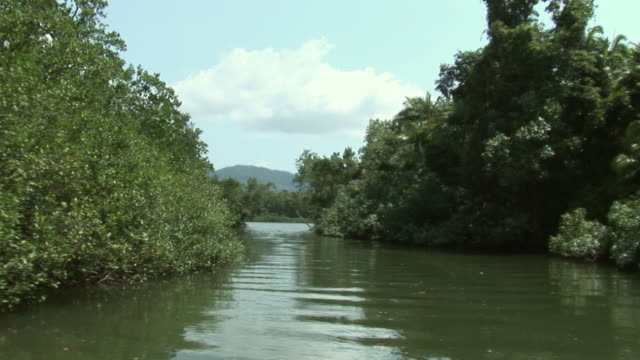 POV Moving on Daintree River surrounded with trees and mangroves, Queensland, Australia