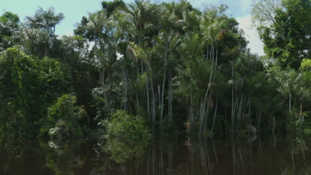 pov moving on tree lined river negro / sao gabriel da cachoeira, amazonas, brazil - cachoeira stock videos and b-roll footage