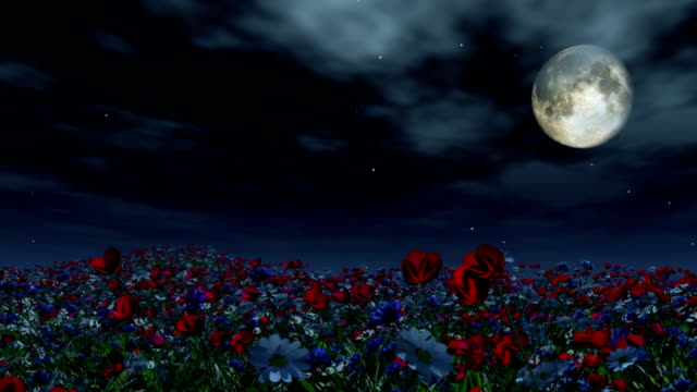 Moving past a field of flowers at night