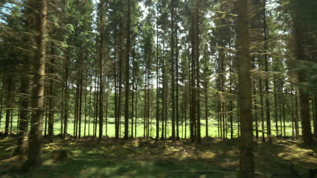 moving past a pine tree forest in sweden - solitude stock videos & royalty-free footage