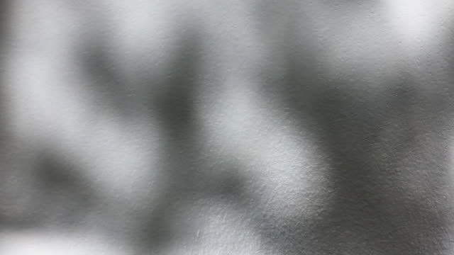 白い壁の背景に風の風の下で木の葉の移動の影 - 囲み塀点の映像素材/bロール