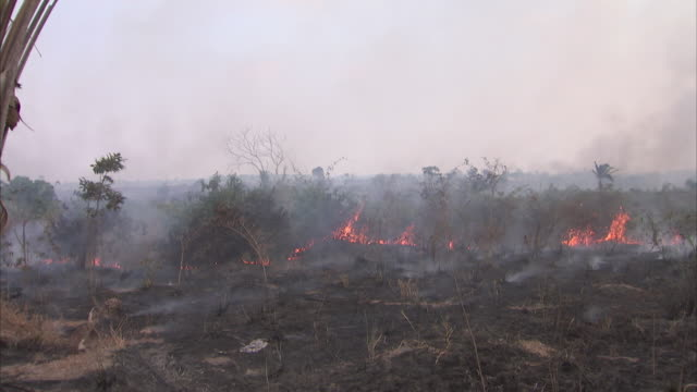 stockvideo's en b-roll-footage met moving shot of a forest fire in brazil - brazilië