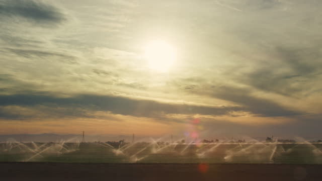 moving shot of sprinklers watering a large, green field underneath a dramatic, hazy, partly cloudy sky - sprinkler system stock videos & royalty-free footage