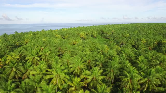 Moving slowly forward over Coconut Palm forest on atoll