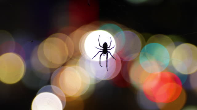 moving spider with city bokeh lights in the background - spider stock videos and b-roll footage