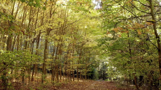 moving through deciduous autumn forest - country road stock videos & royalty-free footage