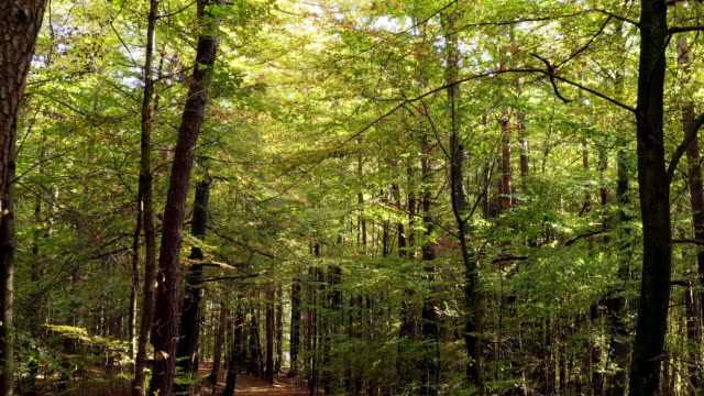 moving through deciduous autumn forest - high point video stock e b–roll