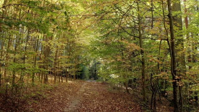 vídeos de stock, filmes e b-roll de passando pela floresta estacional decidual do outono - baixo posição