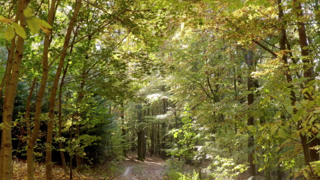 moving through deciduous forest in autumn - country road stock videos & royalty-free footage