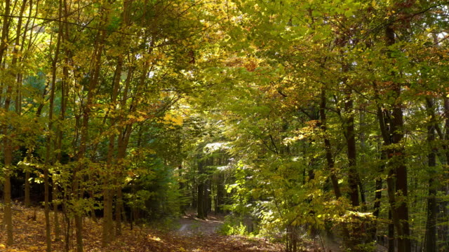 vídeos y material grabado en eventos de stock de moviéndose a través de bosques de hoja caduca en otoño - árbol de hoja caduca