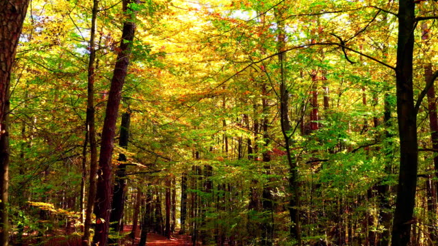 Passant par la forêt décidue en automne