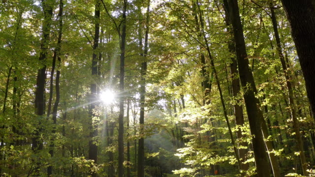 moving through deciduous forest in autumn - dolly shot stock videos & royalty-free footage