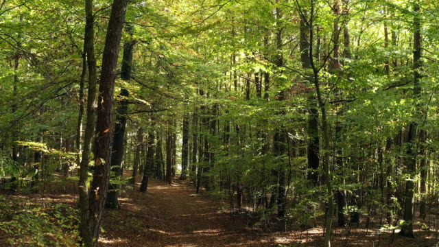 moving through deciduous forest in autumn - woodland stock videos & royalty-free footage
