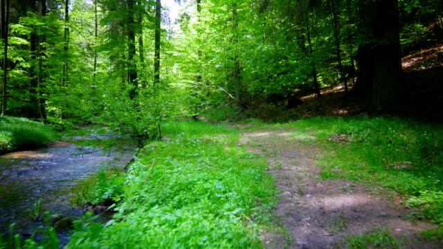 vídeos y material grabado en eventos de stock de gimbal pasar a través de un bosque con creek (4 k uhd a/hd) - acera