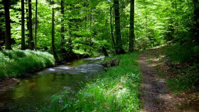 Chiare in movimento attraverso la foresta con Creek (4 k Ultra HD/HD)
