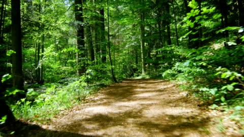vídeos y material grabado en eventos de stock de gimbal pasar a través de un bosque con creek (4 k uhd a/hd) - carretera de tierra