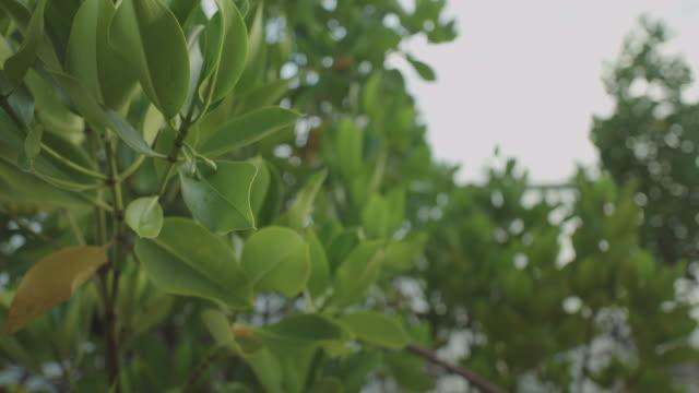 vídeos de stock e filmes b-roll de moving through mangroves - oceano pacífico do sul