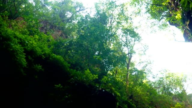 vídeos de stock, filmes e b-roll de movendo-se através do desfiladeiro rochoso e floresta tropical, vista de ângulo baixo - arbusto tropical